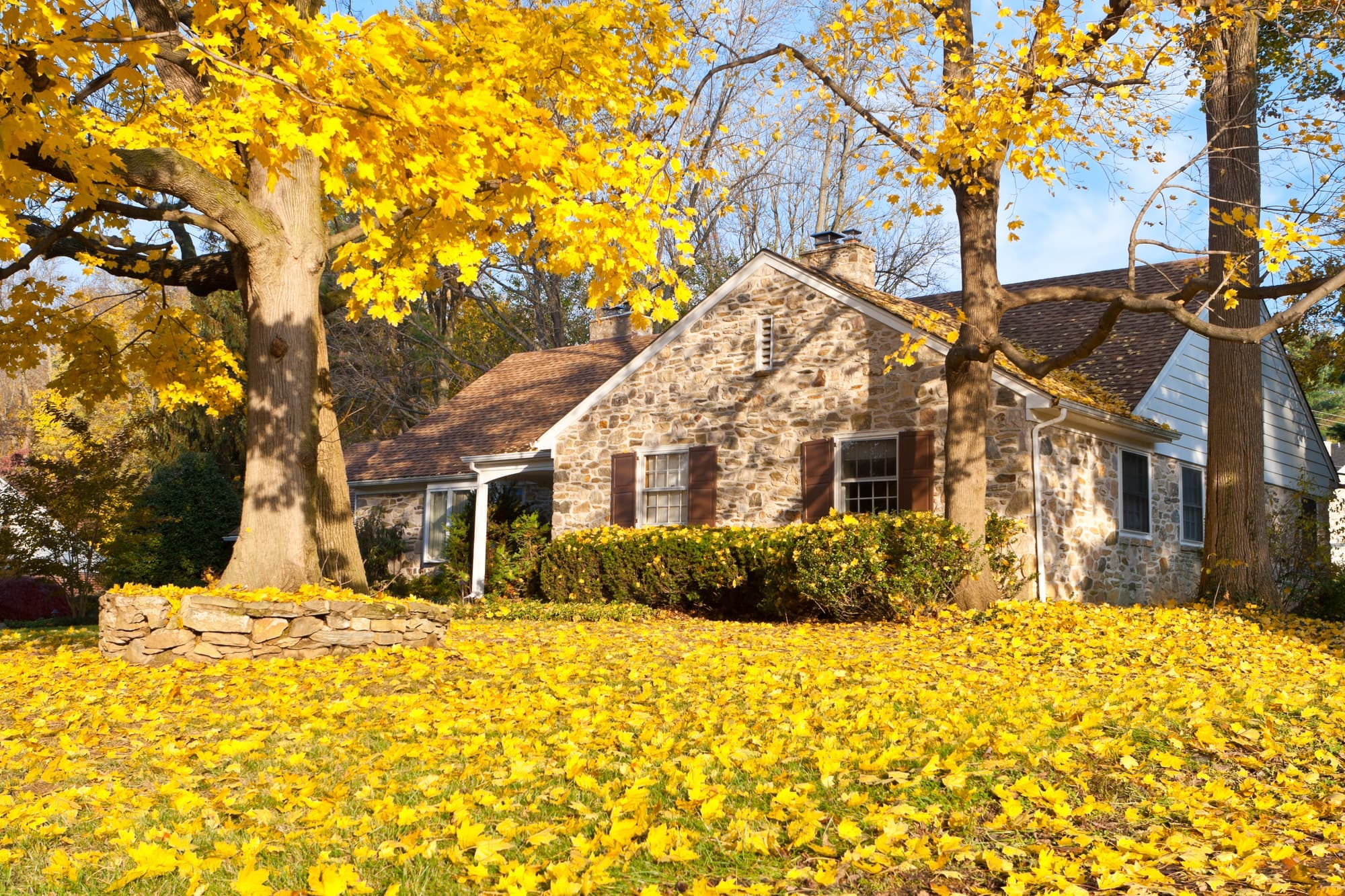 home exterior in fall with yellow leaves in yard